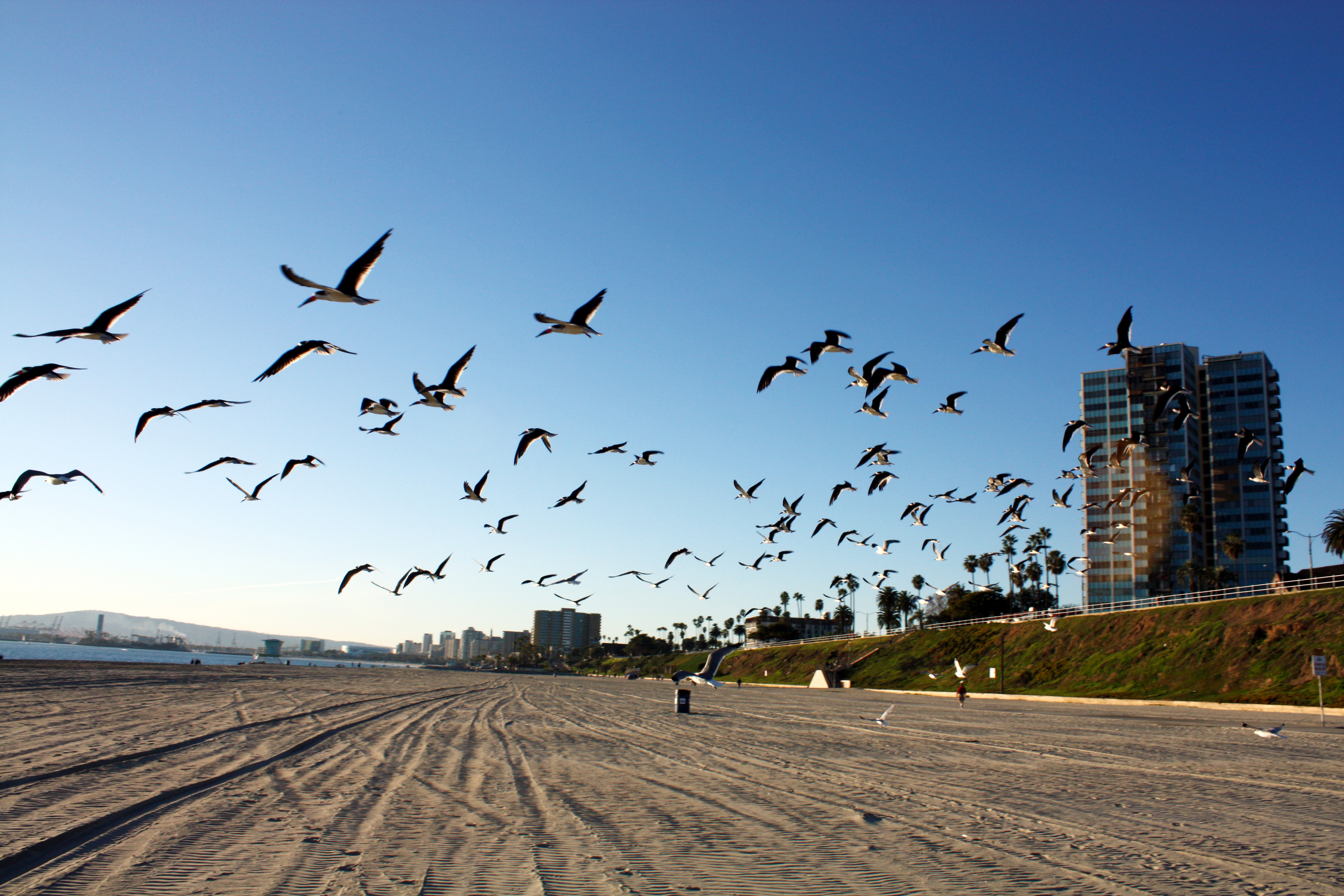 Long Beach Public Transportation Company
