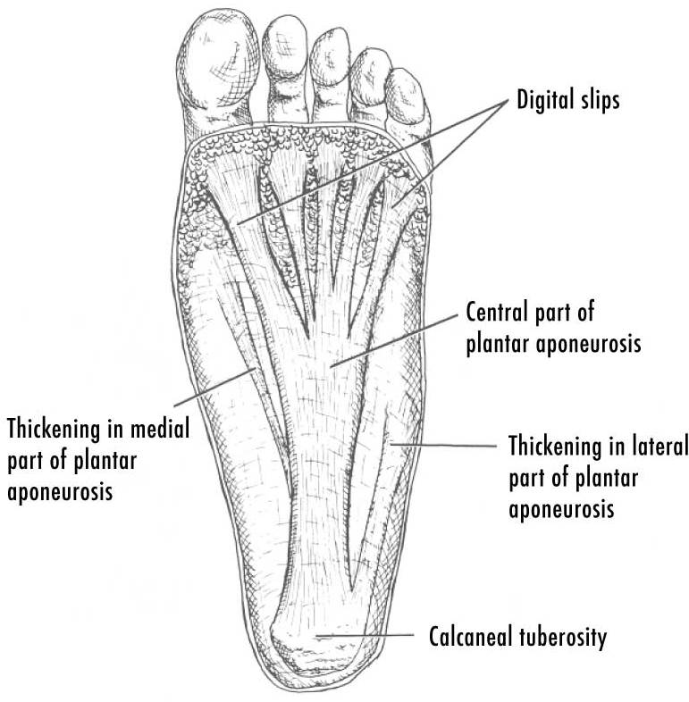 Filepf Plantardesigncropg Wikimedia Commons