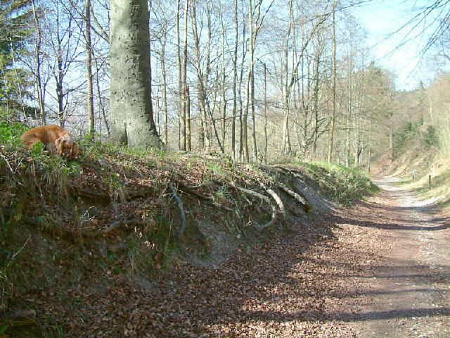 Path in Wendover Woods on Haddington Hill - geograph.org.uk - 8097