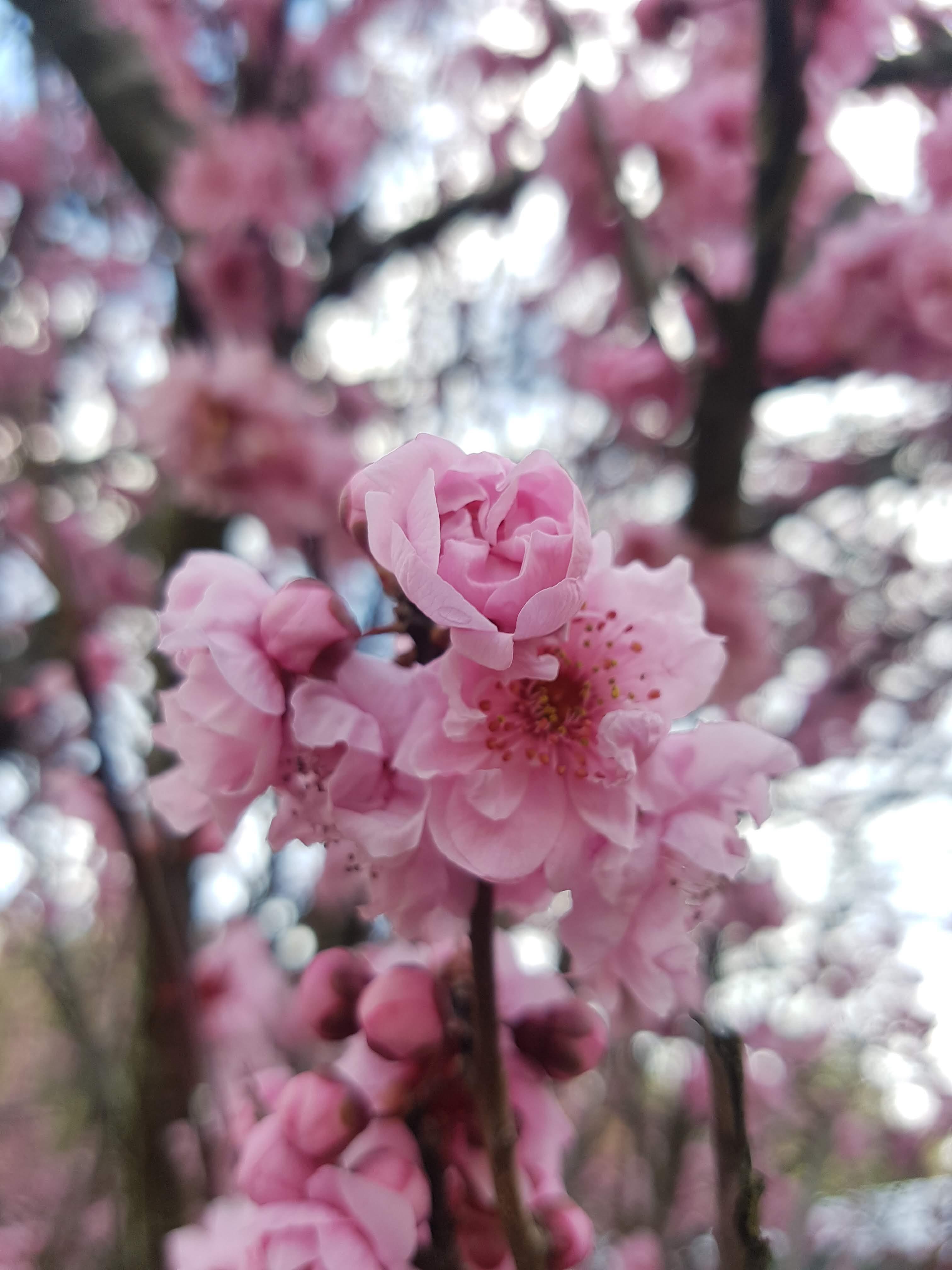 Blossoms com login php www Home