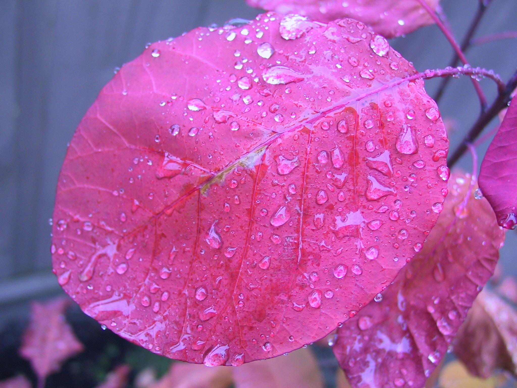 Beauty In Rain