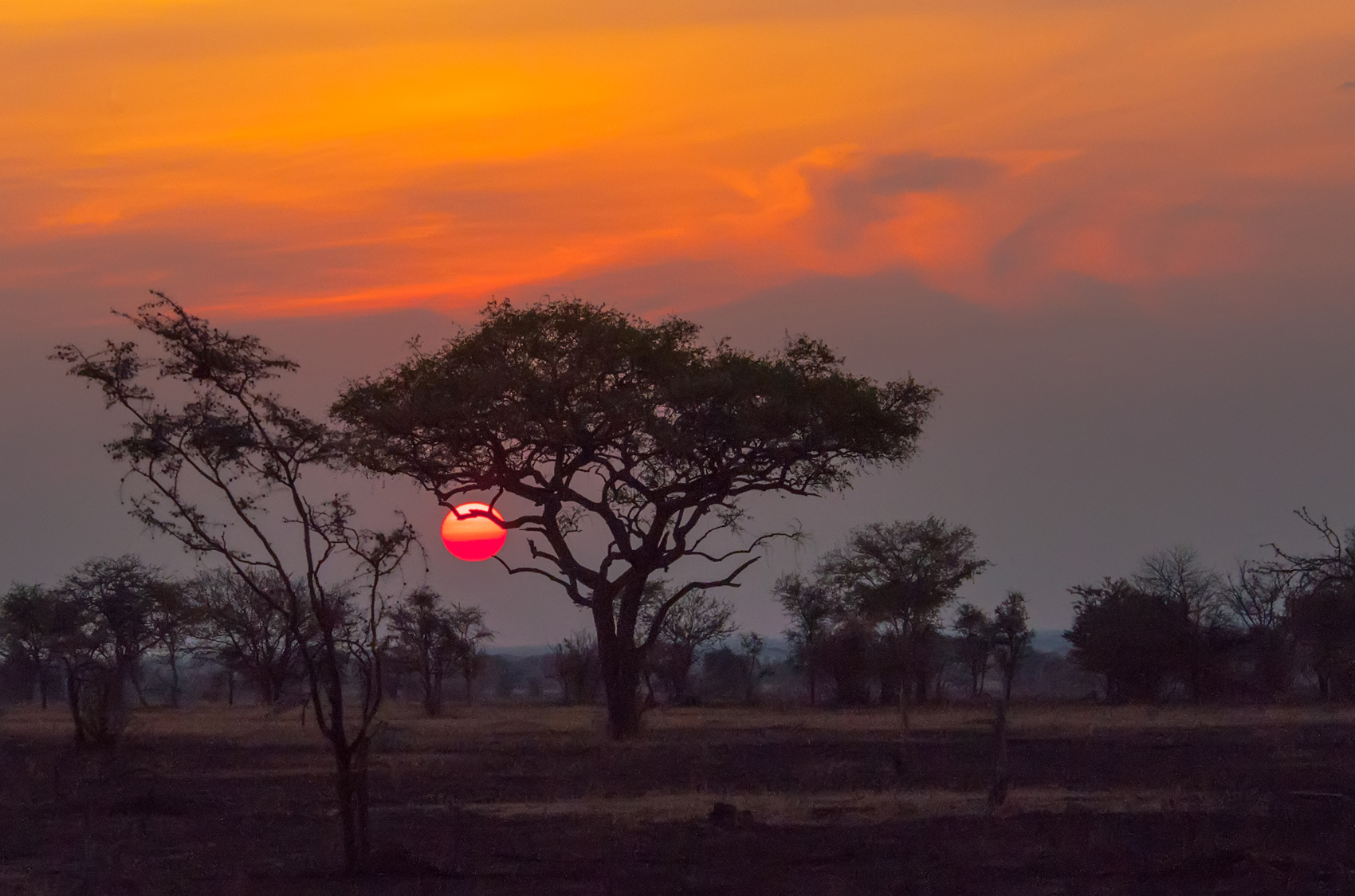Image result for The Serengeti, Tanzania sunset