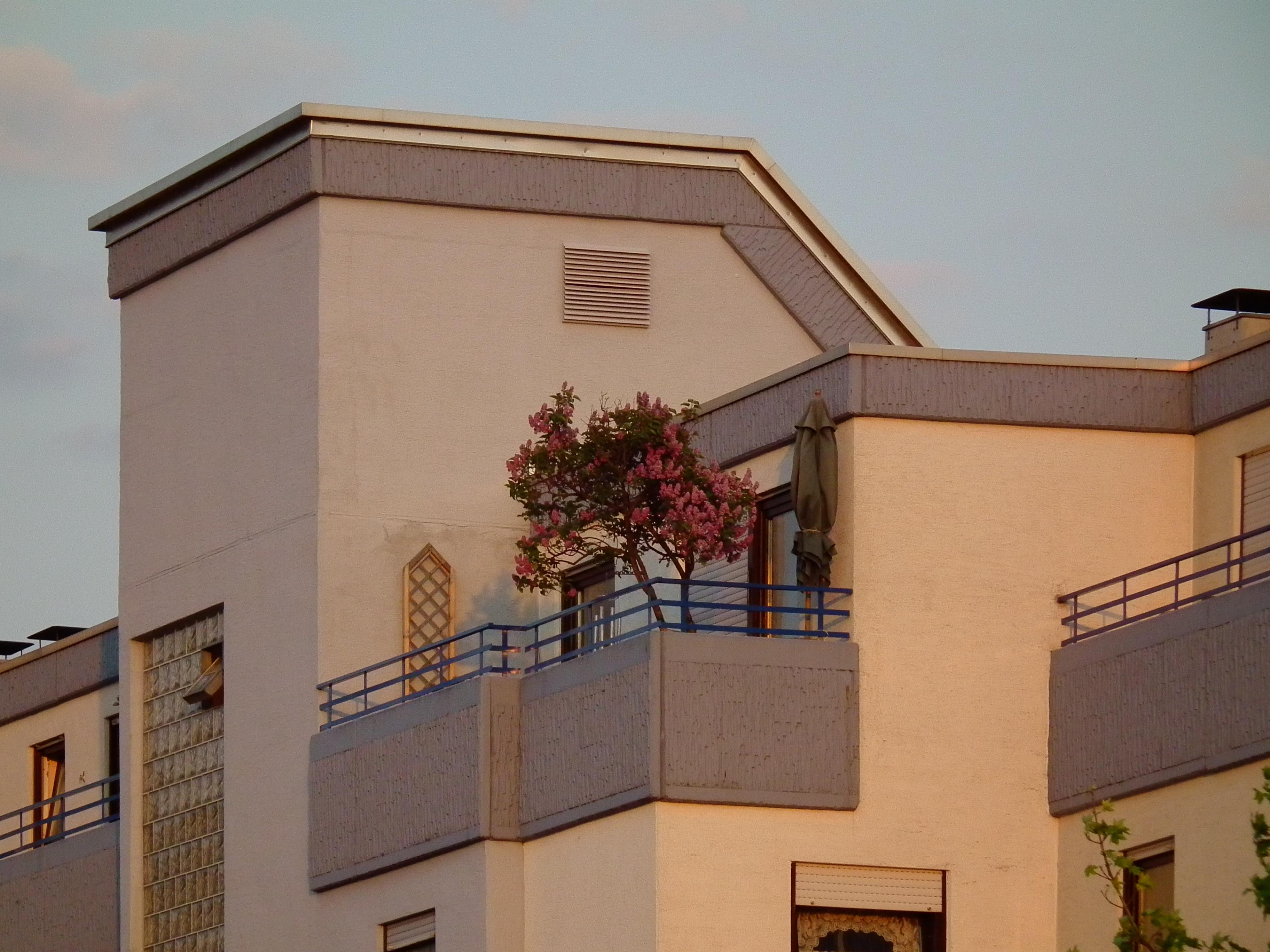 File Syringa Vulgaris Auf Balkon In Schriesheim Jpg Wikimedia