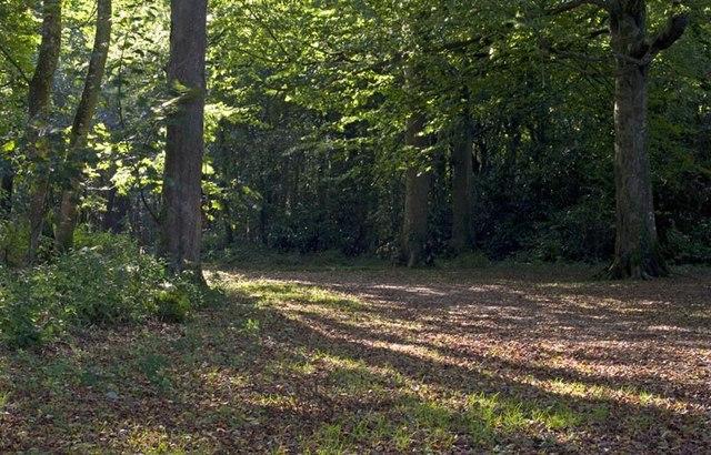 Tehidy woods - geograph.org.uk - 236084