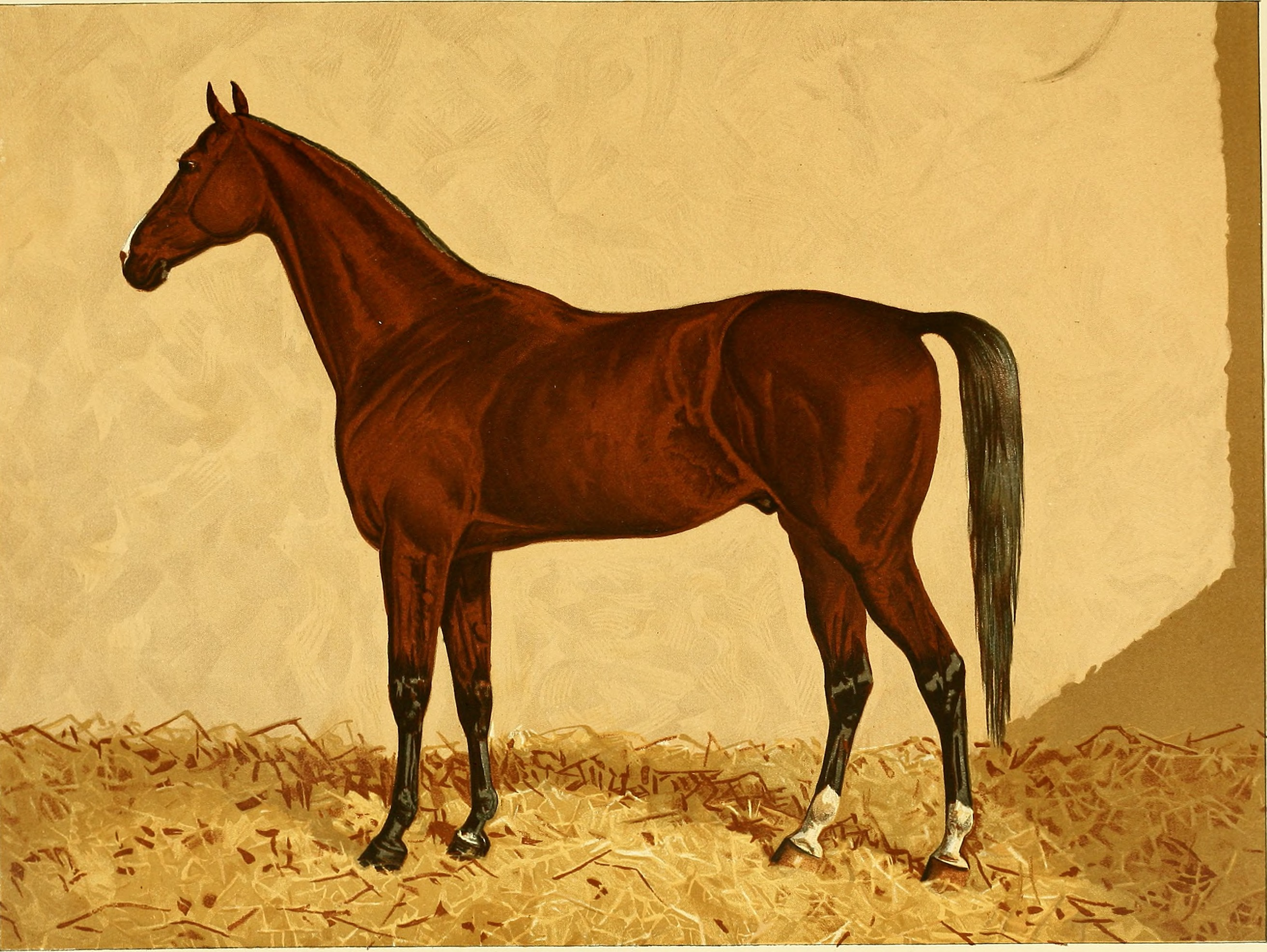 File The Arabian Horse His Country And People With Portraits Of Typical Or Famous Arabians And