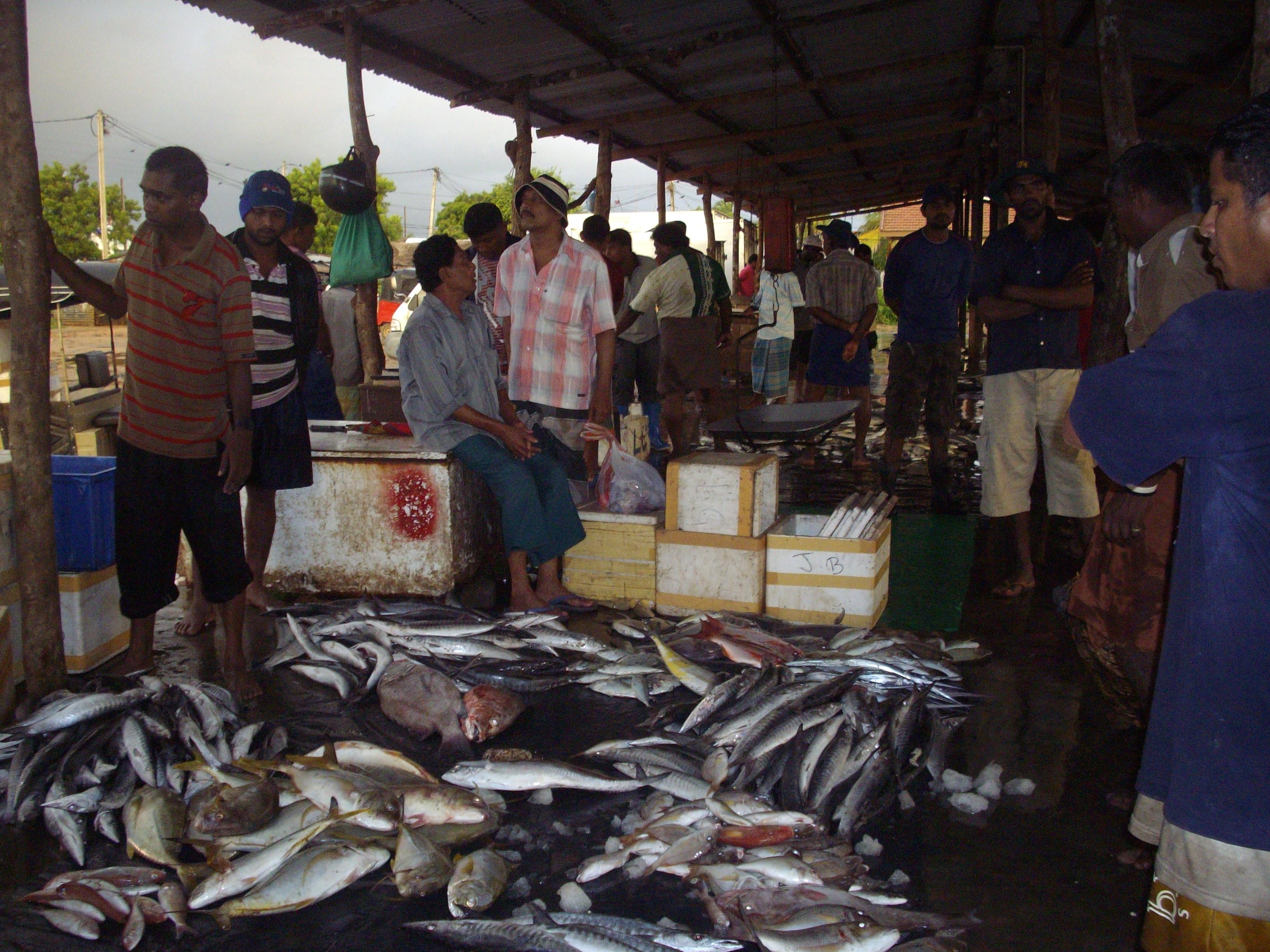 File trincomalee fish market jpg wikimedia commons for Empire fish market