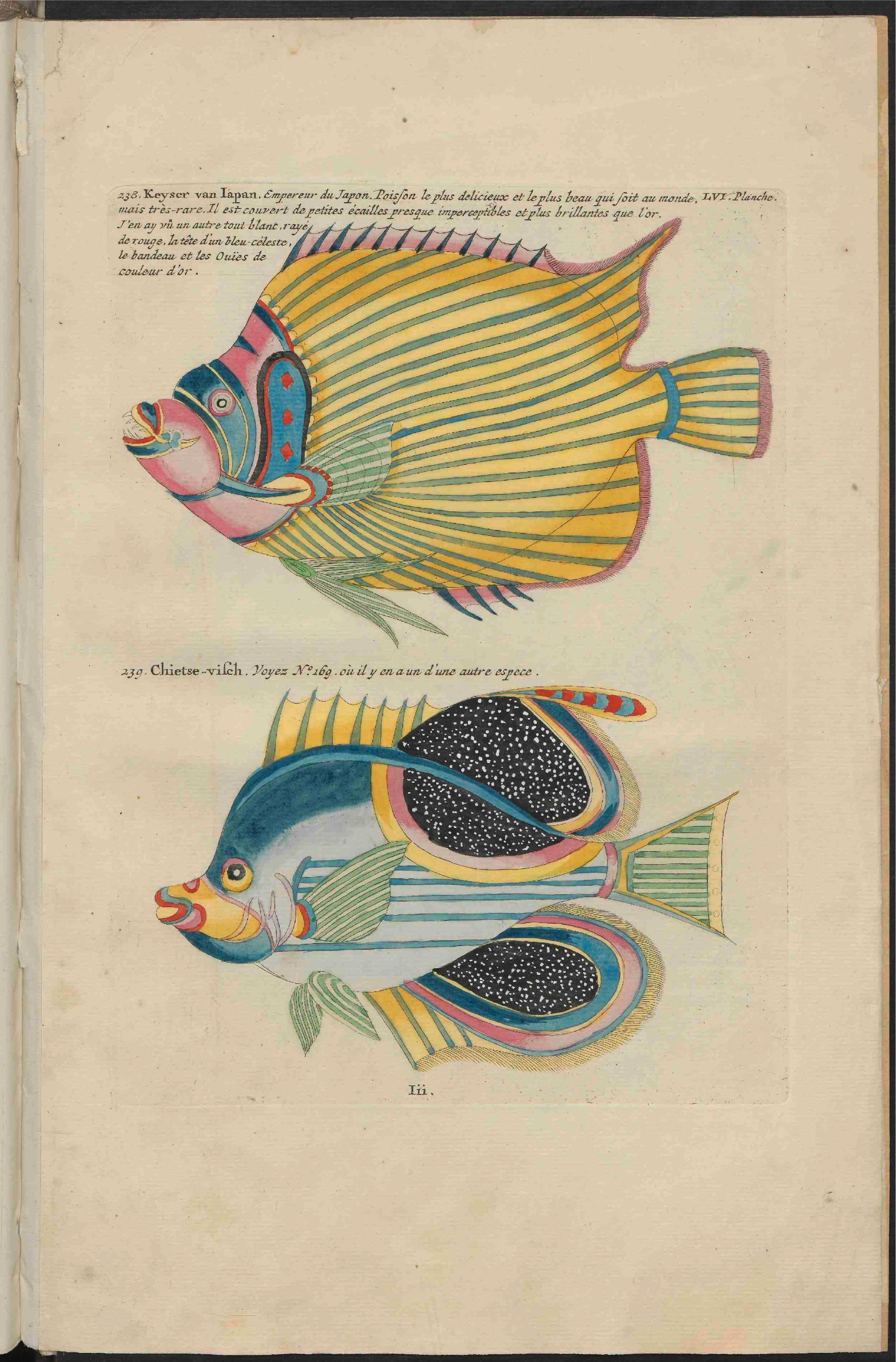 Fileub Utrecht Louis Renard 1782 Natuurlyke Historie