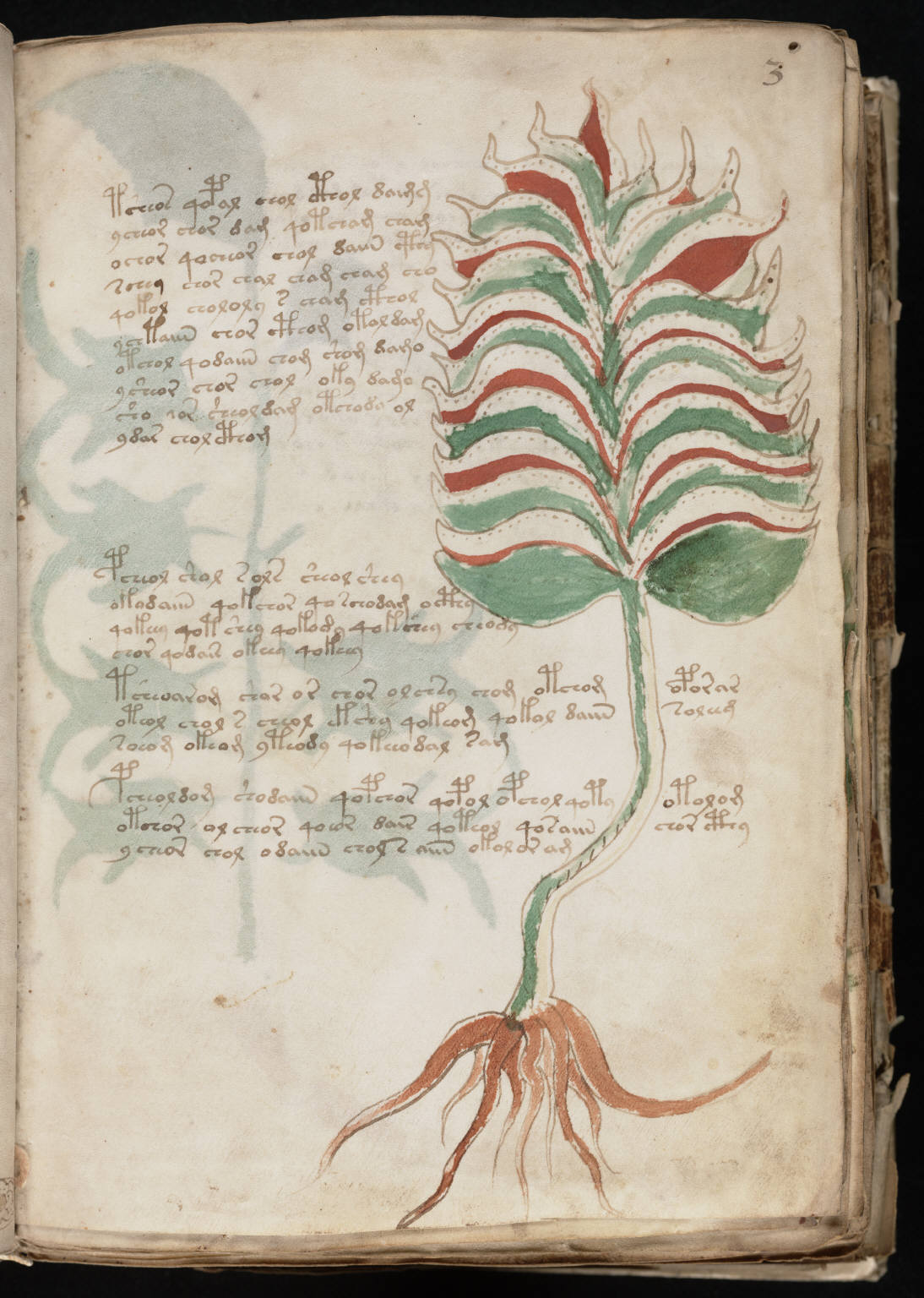 Voynich Manuscript %287%29 ヴォイニッチ手稿(写本) どの言語にも属さない謎の文字!