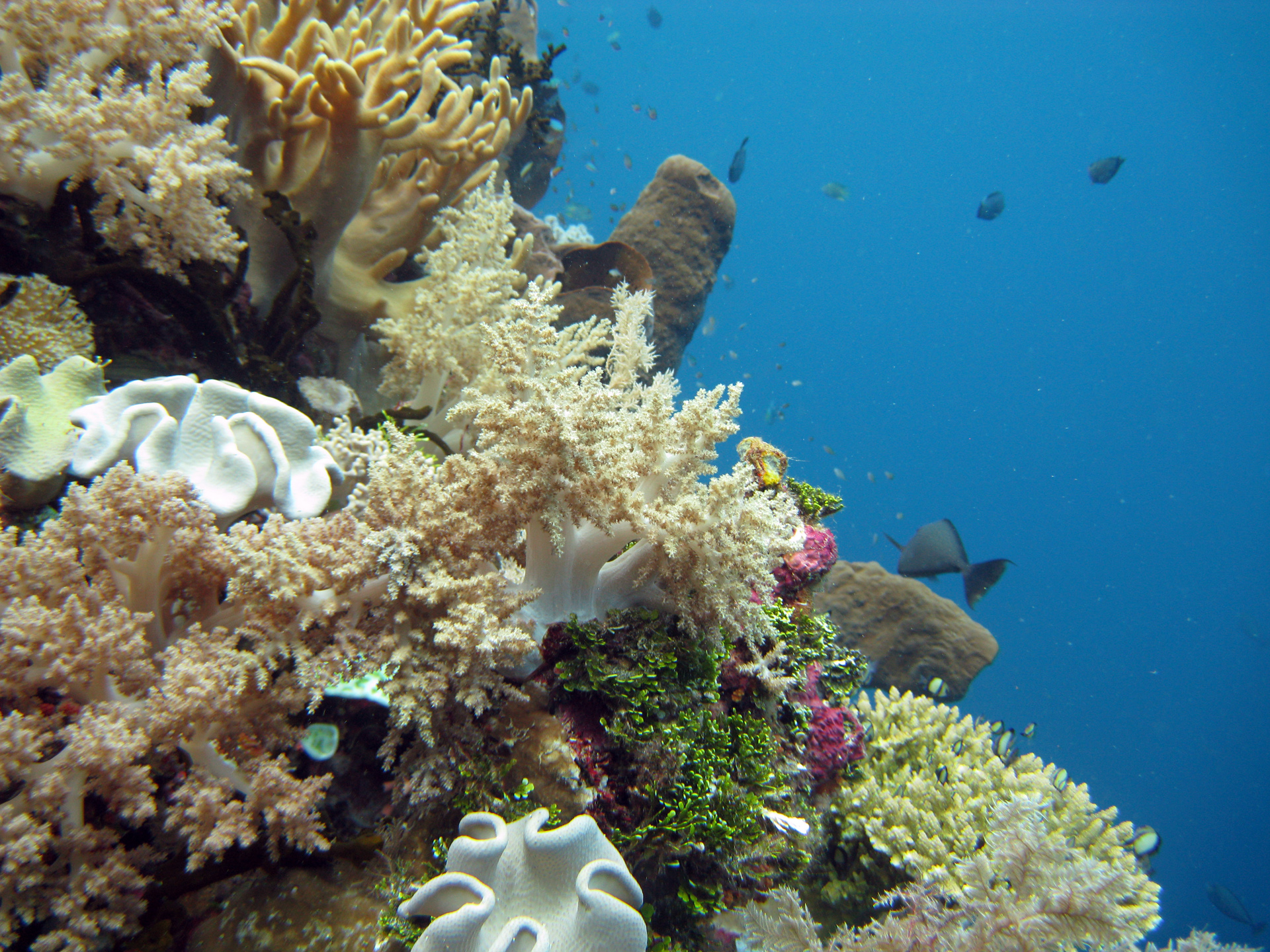 http://upload.wikimedia.org/wikipedia/commons/b/b1/Wakatobi-233.jpg