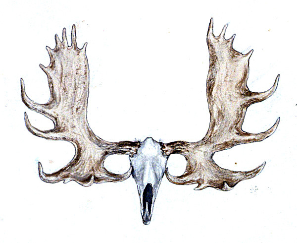 Image Result For Reindeer Head With