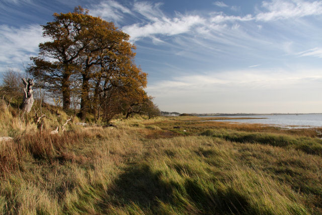 Bank of the River Orwell - geograph.org.uk - 1592162