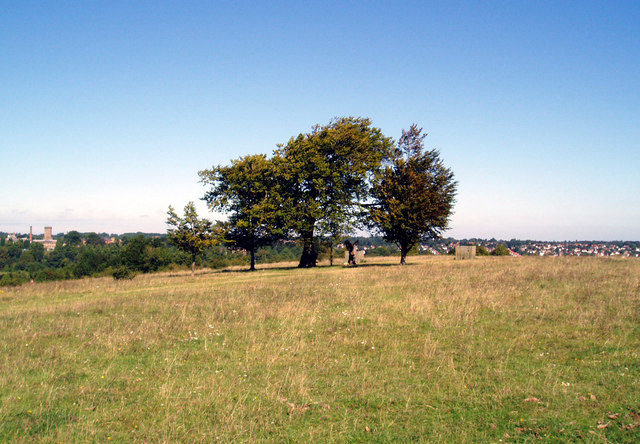 Beeches of Farthing Downs - geograph.org.uk - 868178