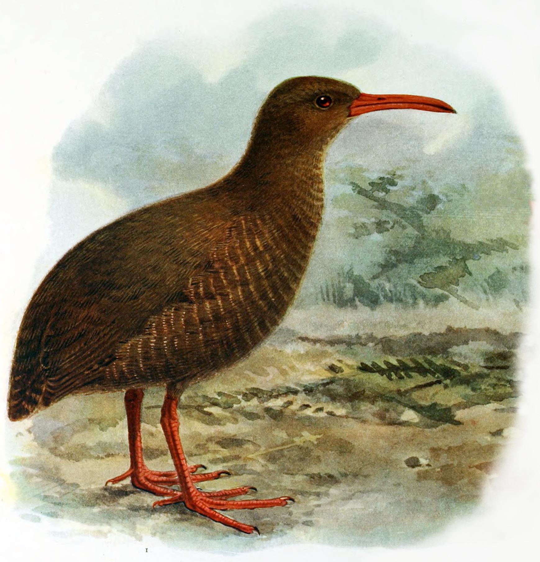 List Of Extinct Birds Norfolk Island