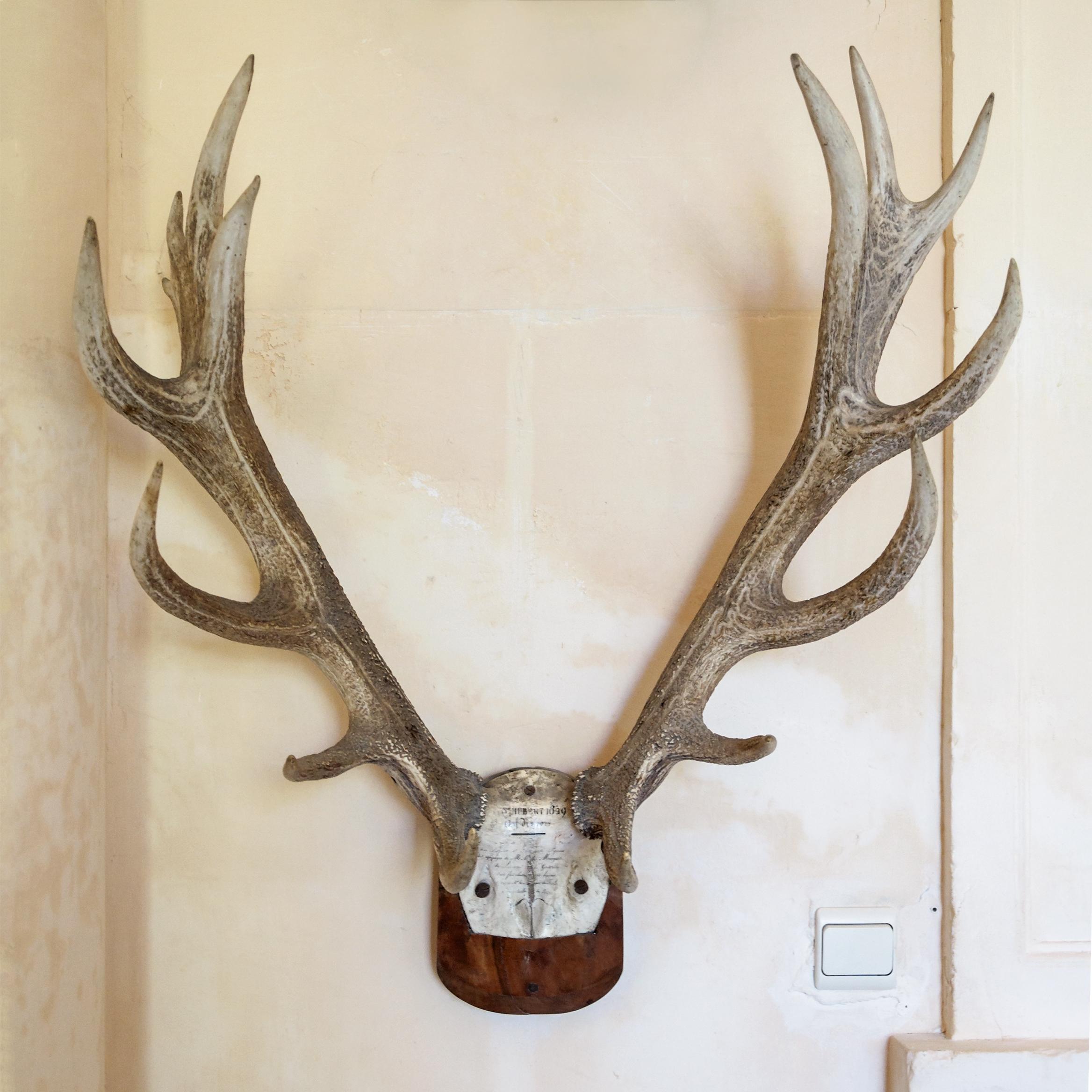 file cerf 10 cors trophee chateau wikimedia. Black Bedroom Furniture Sets. Home Design Ideas
