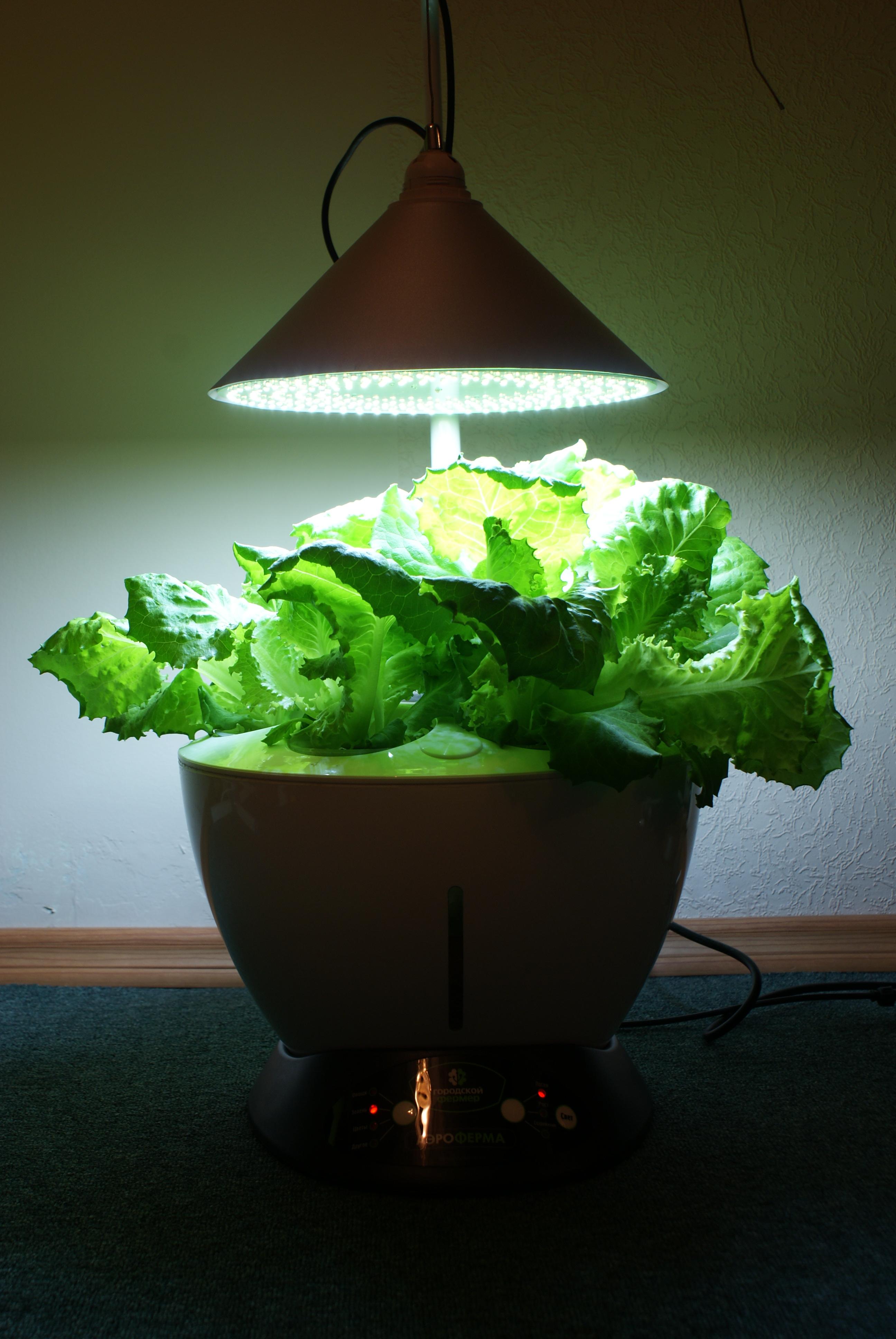Aeroponics Salad
