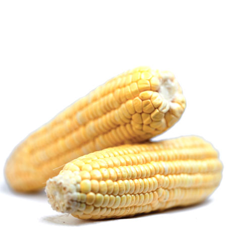 image of yellow corn
