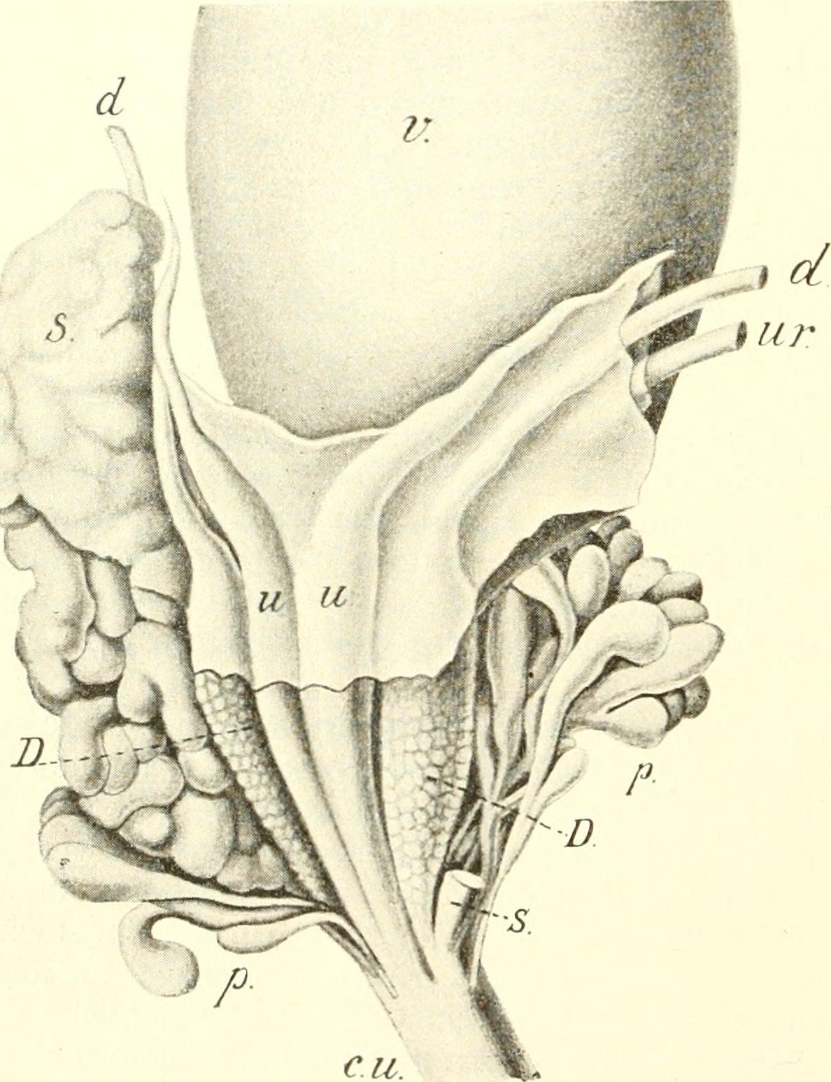 Erfreut Einführung Der Anatomie Ideen - Anatomie Ideen - finotti.info
