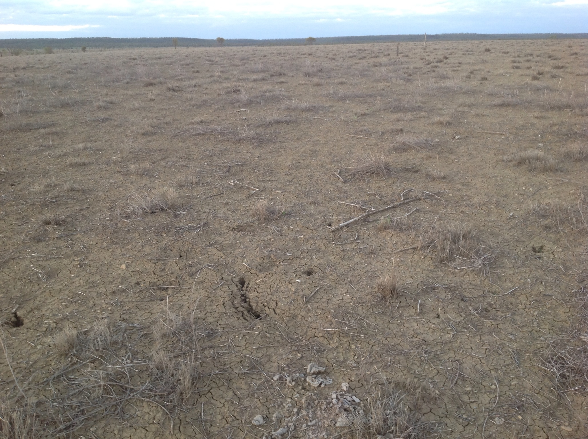 Image result for australia drought