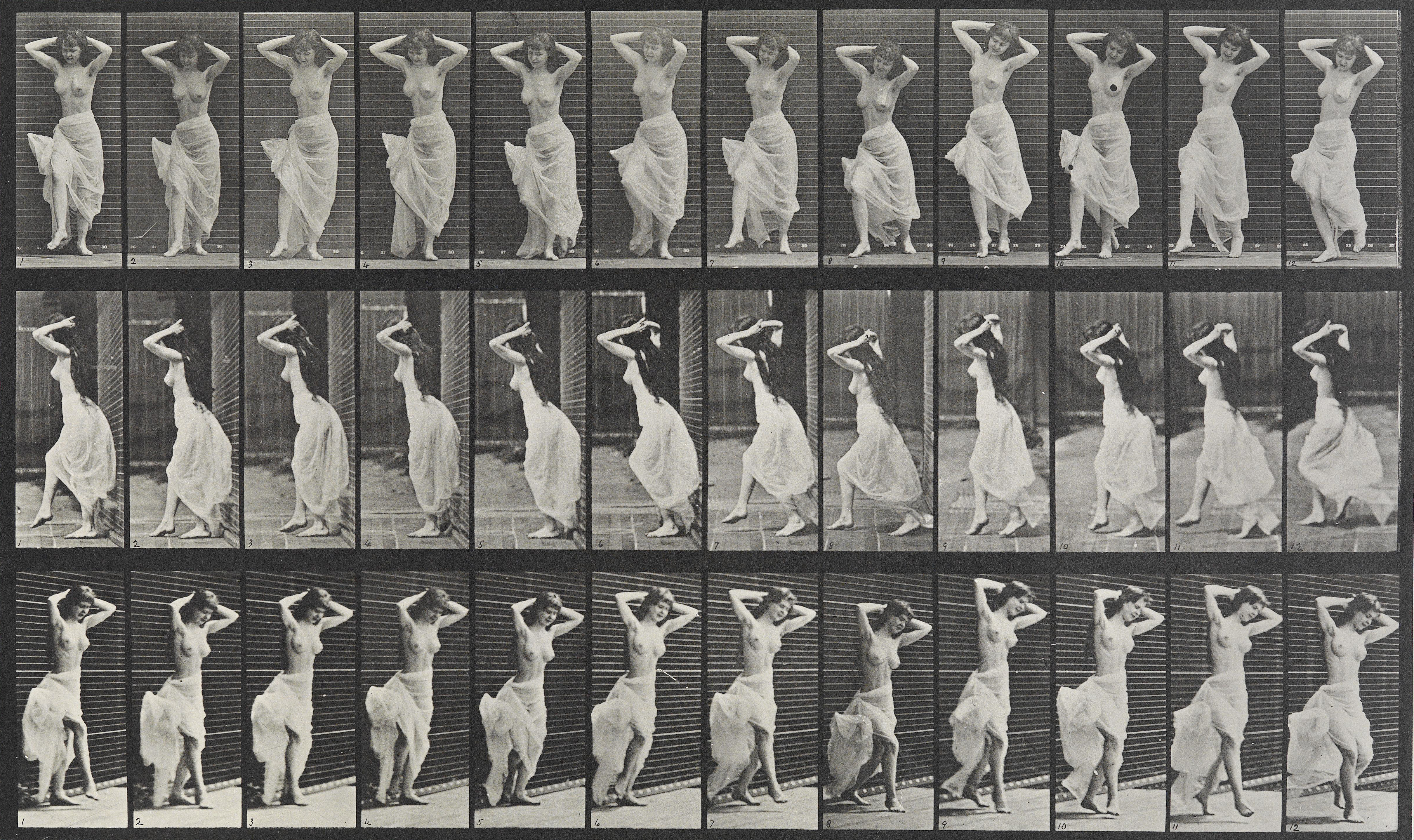 Muybridge Animals In Motion Pdf