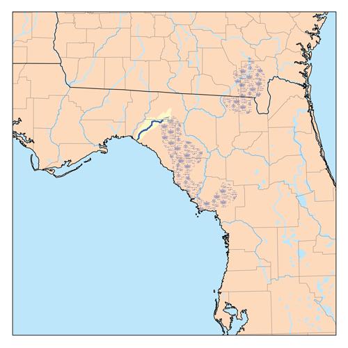 Econfina River Wikipedia