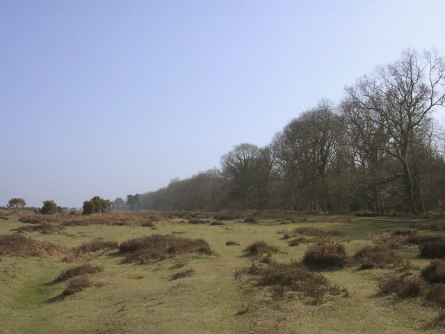 Edge of Wilverley Inclosure, New Forest - geograph.org.uk - 24959