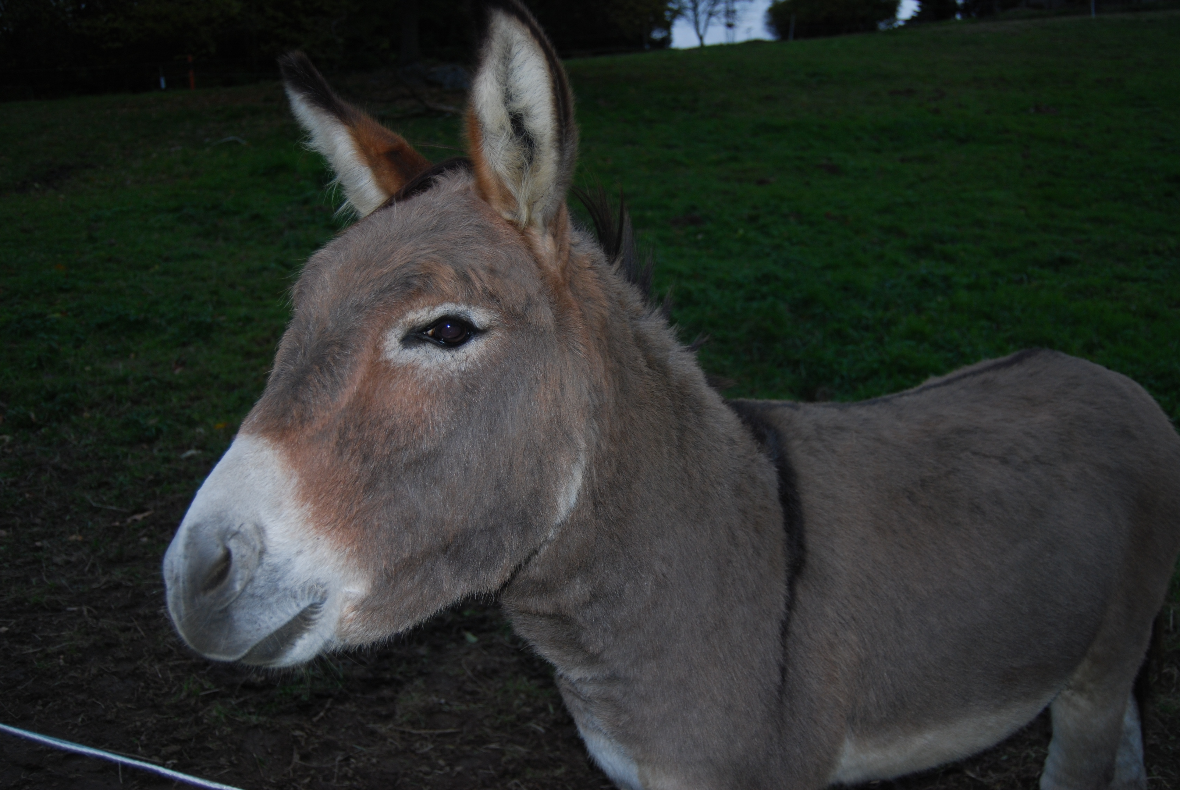 File:Equus Domesticated Animals 115.jpg