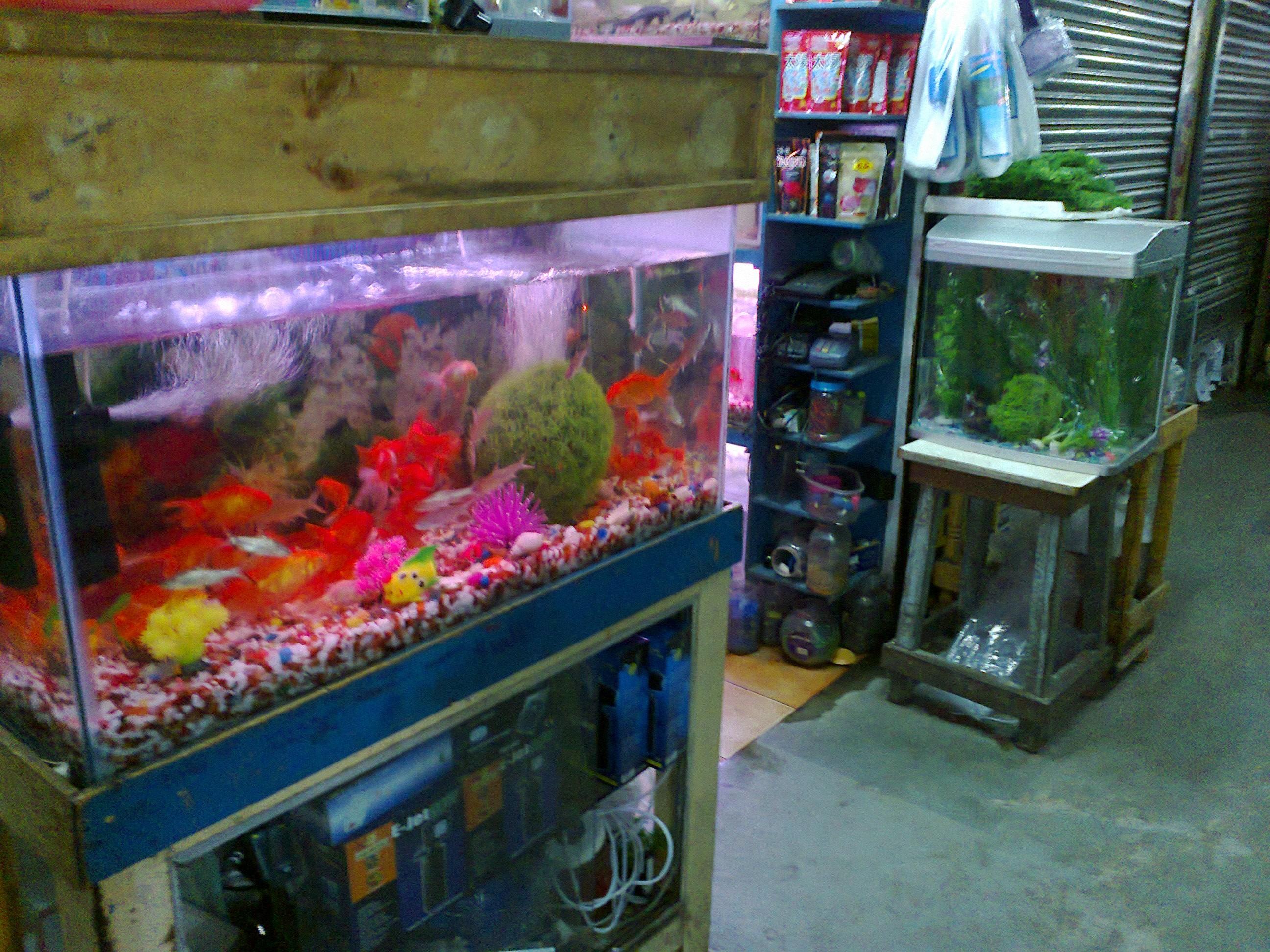 Fish aquarium dimensions - File Fish Tank Jpg