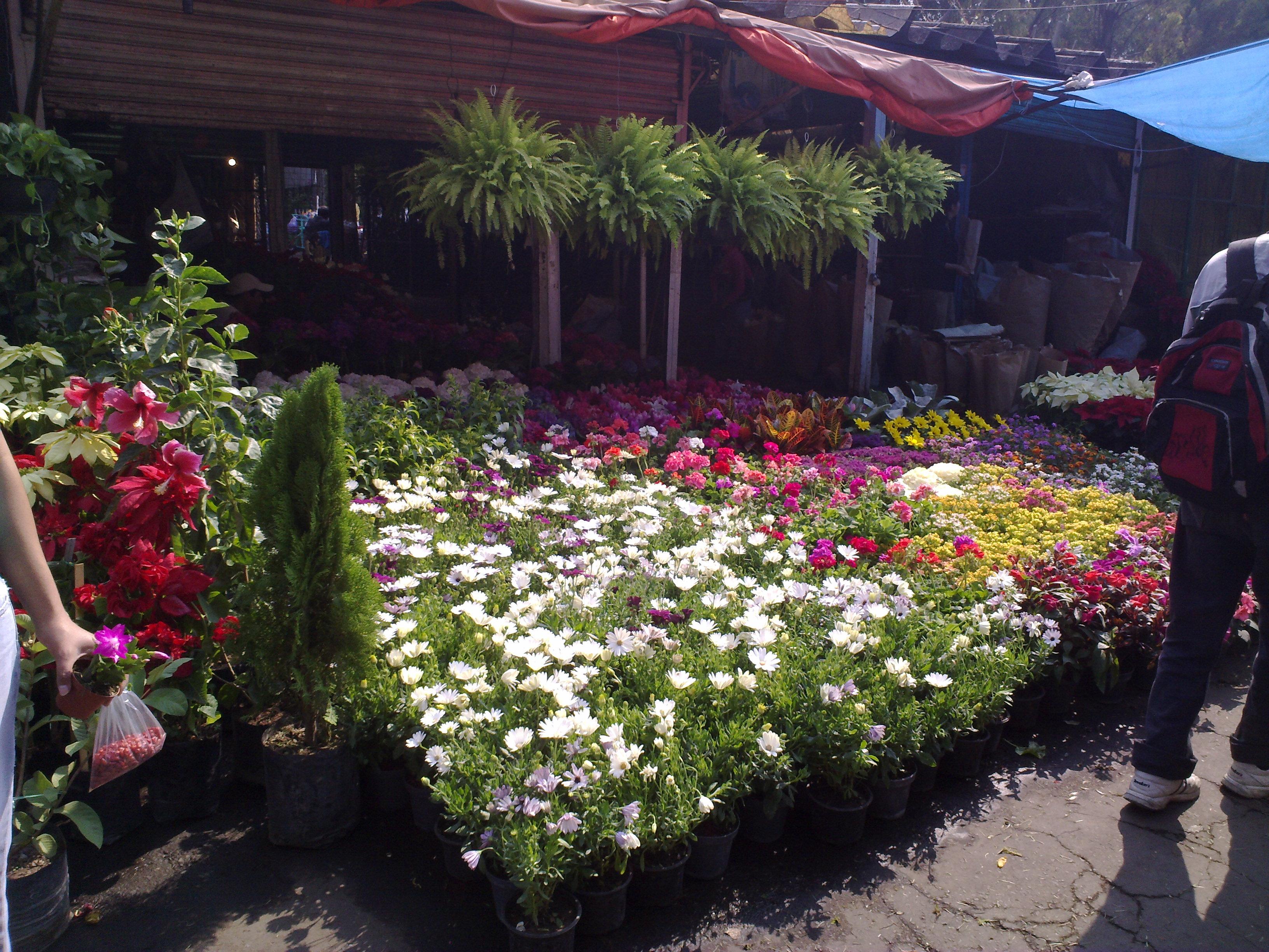 Plantas fotos with plantas fotos beautiful plantas fotos - Madreselva en maceta ...