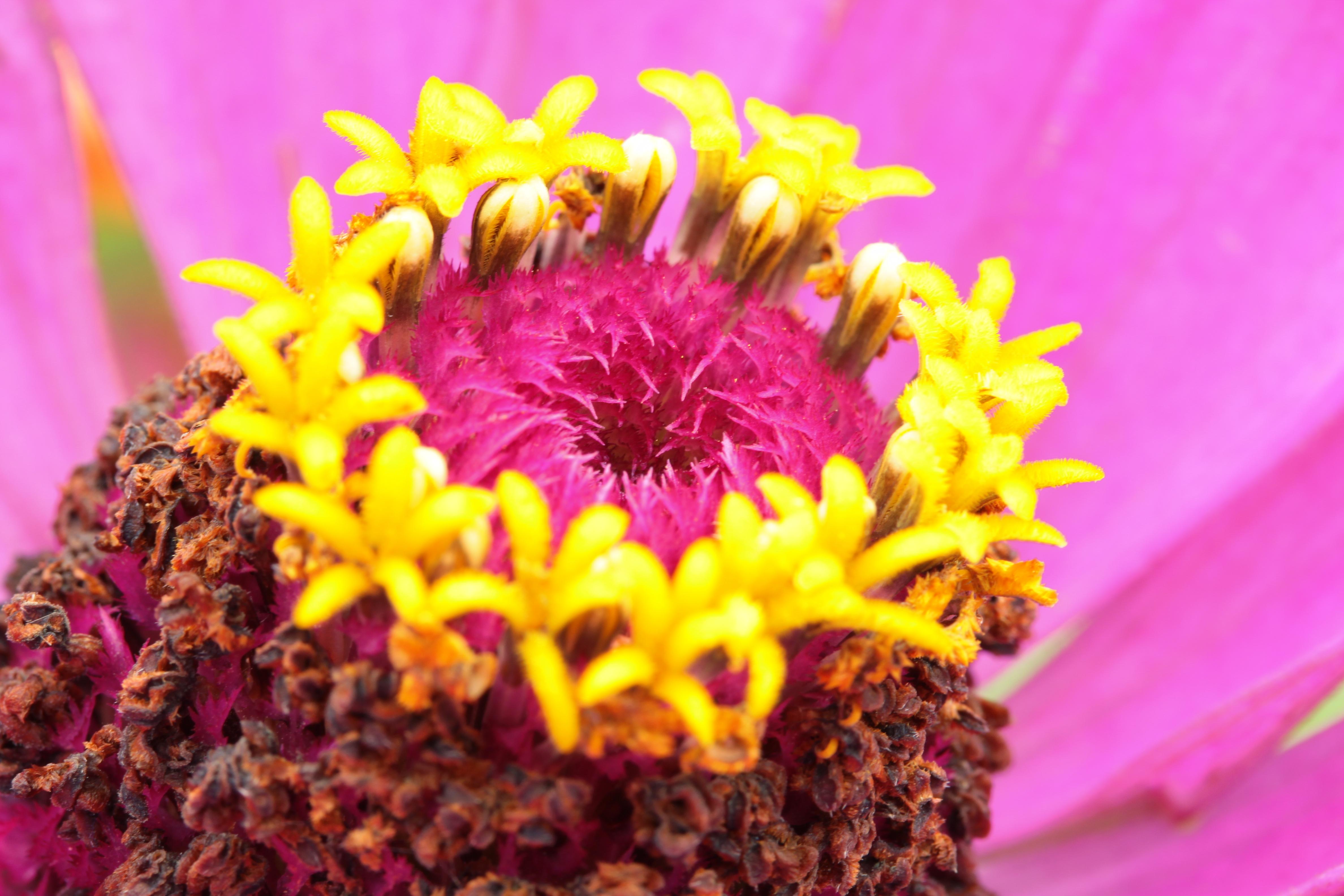 Gartenpflanzen  File:Gartenpflanzen 2012-09-01-0283.jpg - Wikimedia Commons