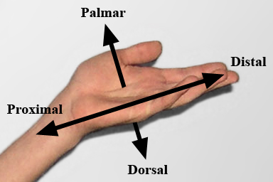 Direction used in hands