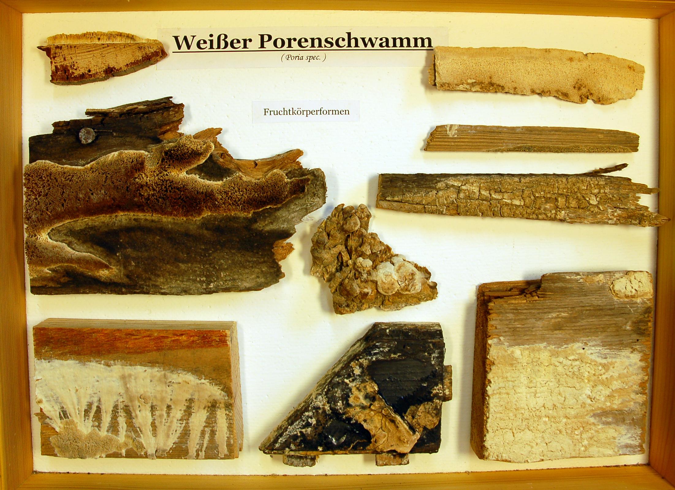 Holzschaedlinge-09