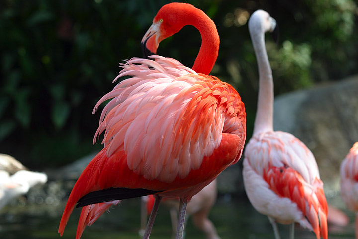 File:Lightmatter flamingo.jpg