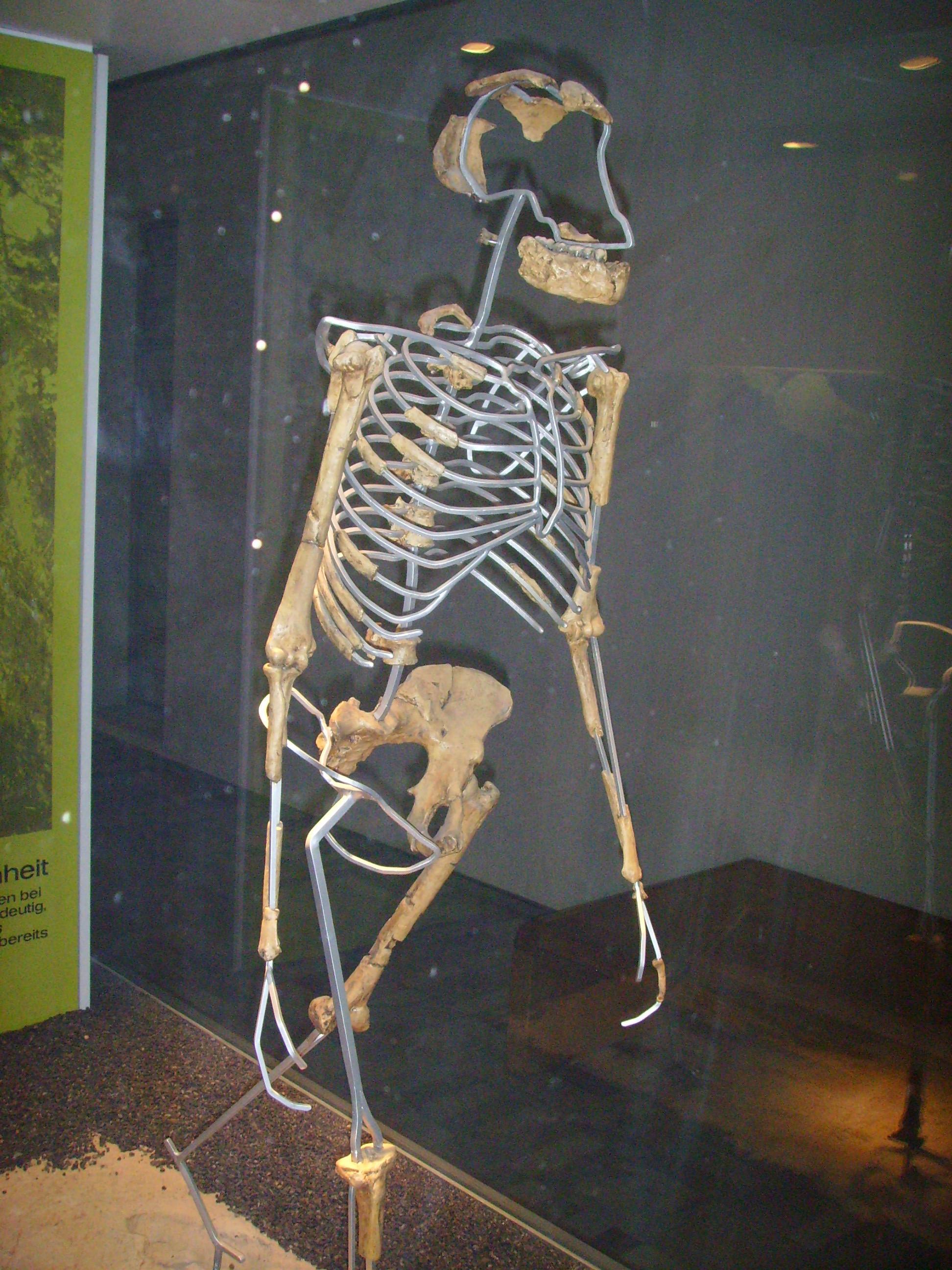 Radiometric dating evidence for evolution 3