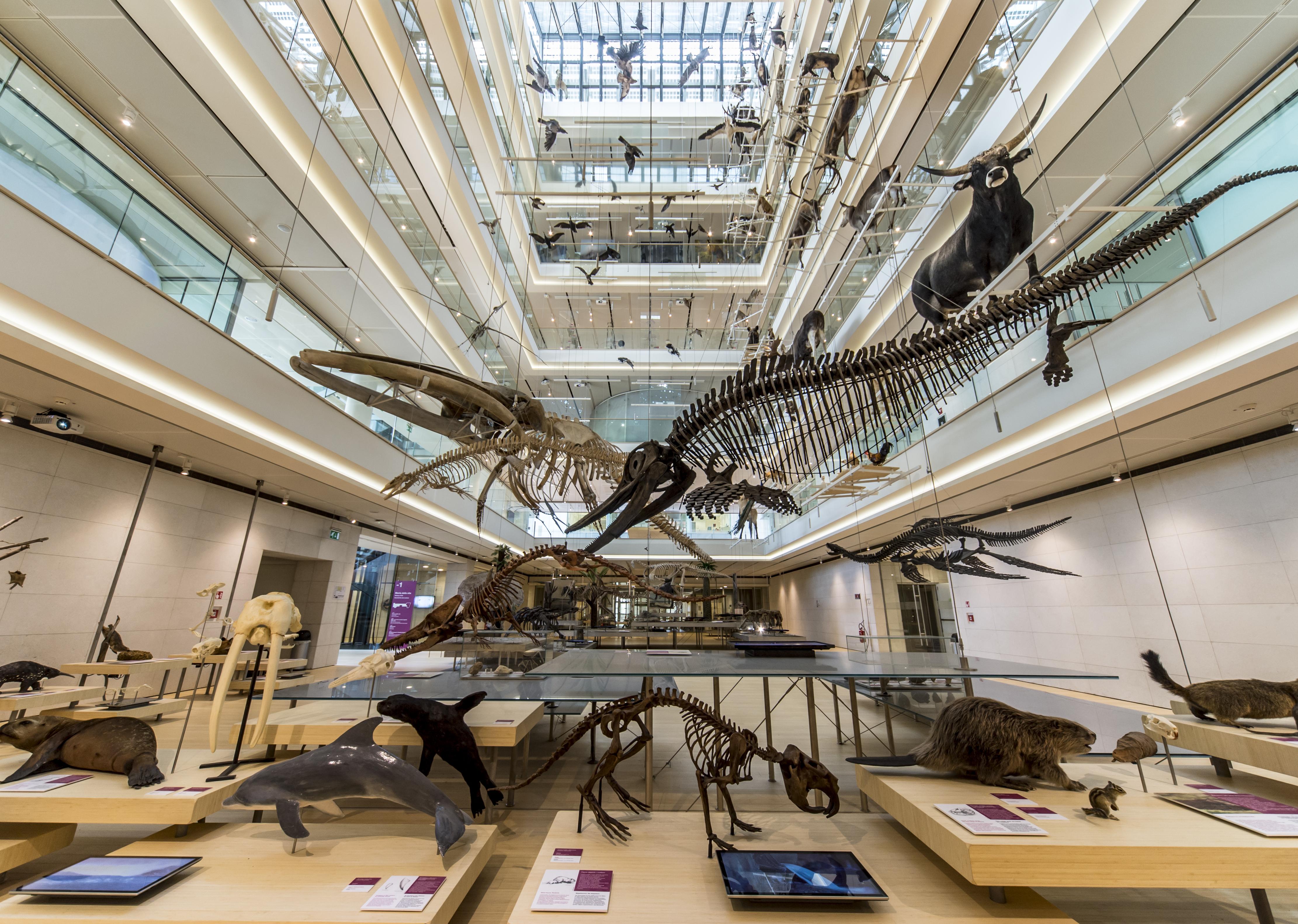 Risultati immagini per museo delle scienze trento