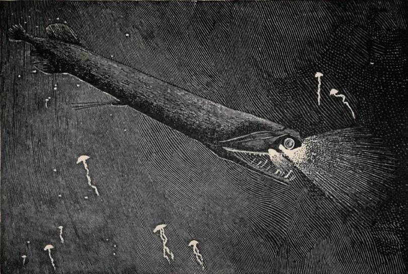 wiki deep sea fish upcscavenger