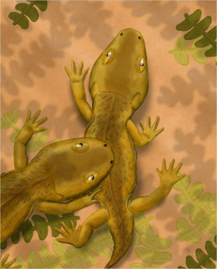 micropholis amphibian wikipedia