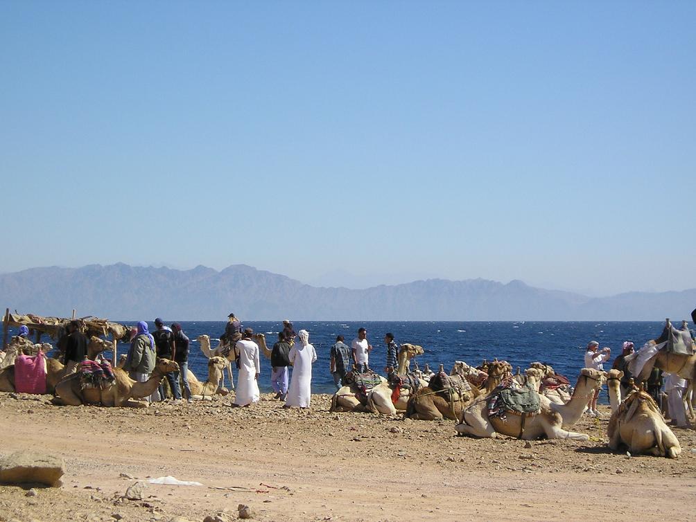 file near dahab background saudi arabia jpg   wikimedia