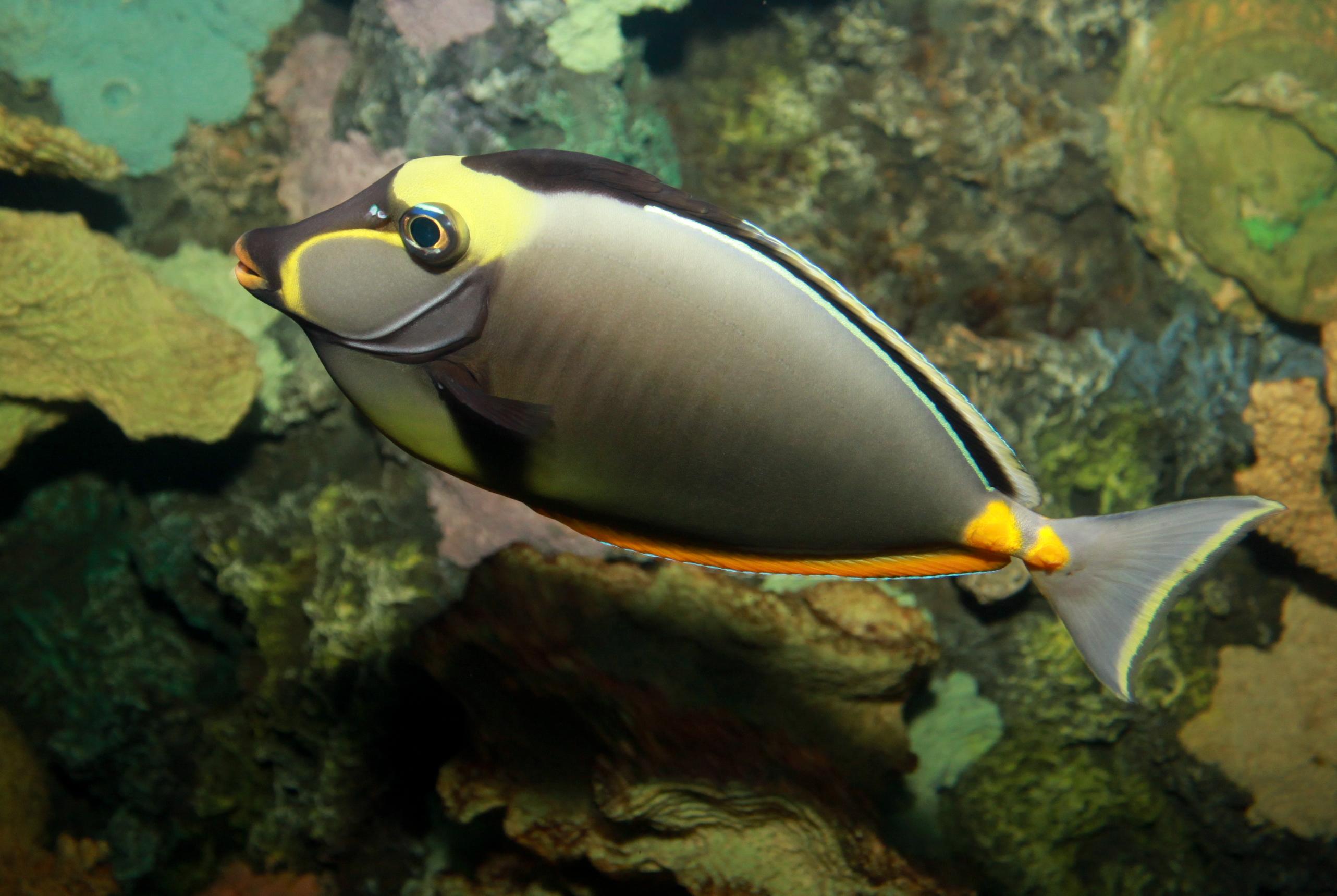 активно снимается названия и фото океанских рыб медленно покрывала