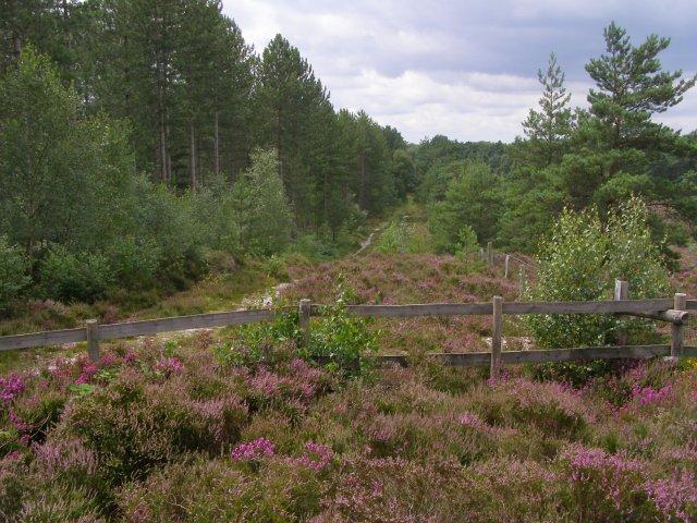 Path along the northern edge of Ramsdown Plantation - geograph.org.uk - 510177