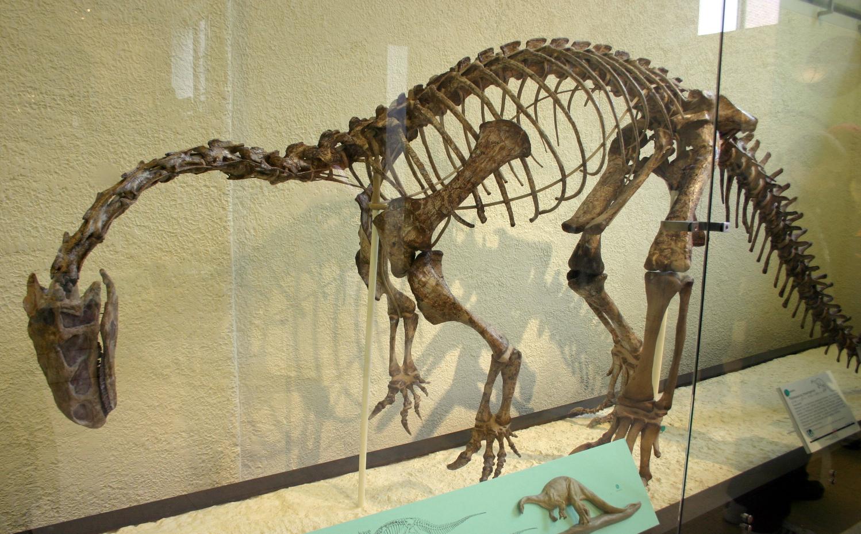 Plateosaurus – Wikipedia
