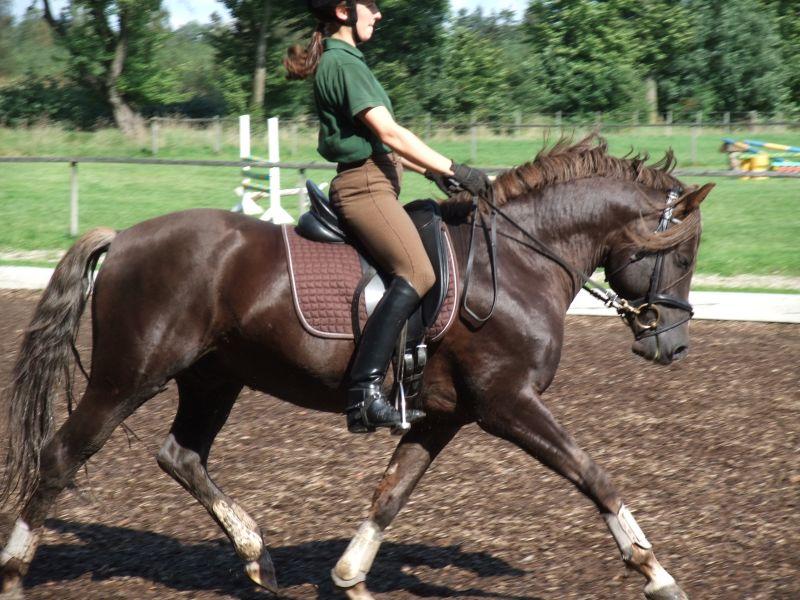 http://upload.wikimedia.org/wikipedia/commons/b/b2/Pony_Stallion.jpg