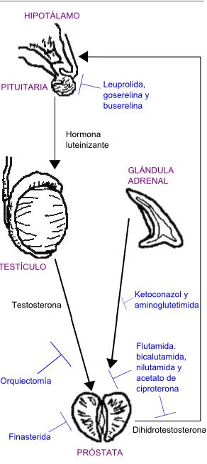 la diarrea es un efecto secundario de la radiación prostática