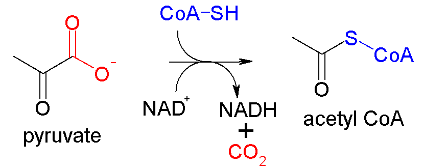 pyruvate decarboxylation