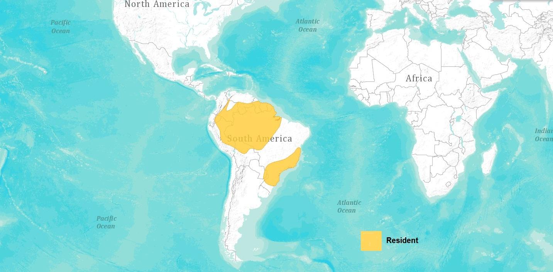 [Image: Range_Map_Grey-Bellied_Hawk.jpg]