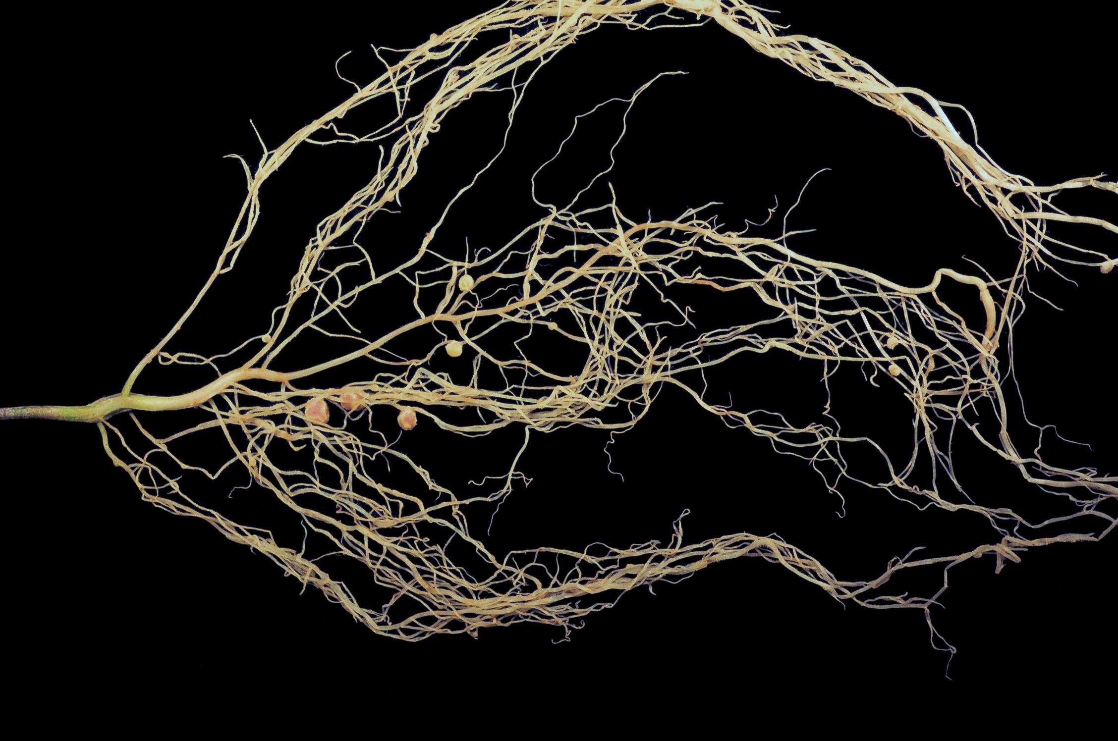 Build A Root Cellar Design