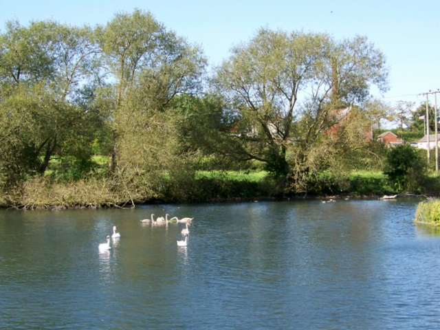 Swans on Wilton Water - geograph.org.uk - 1483437