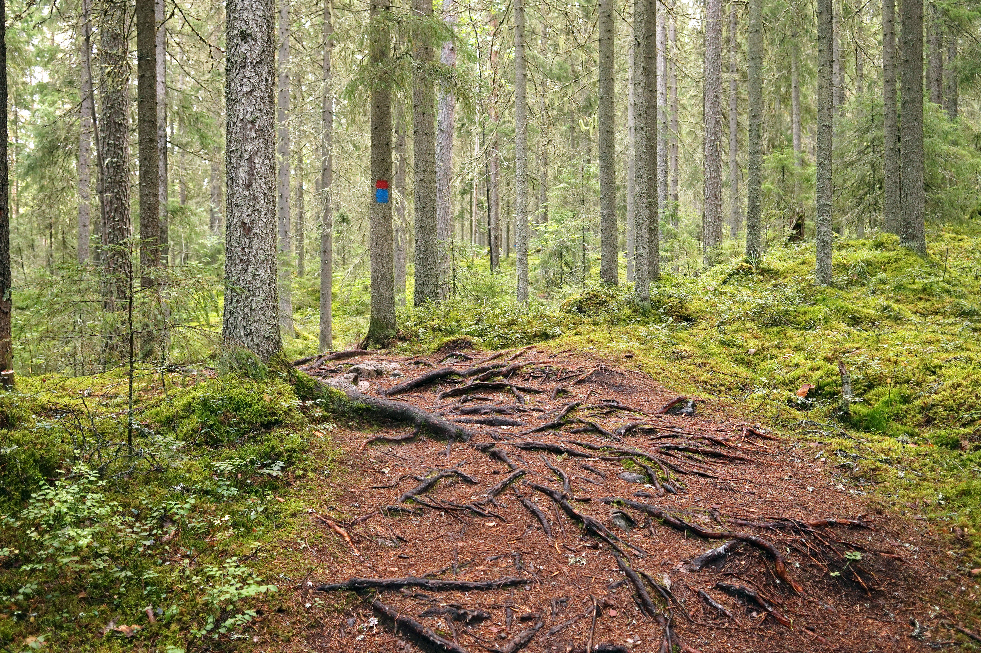 Image result for tree roots