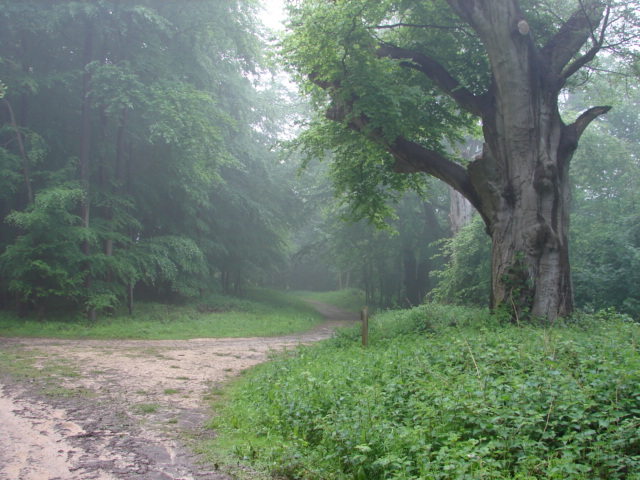 Woods near My Lady's Seat - geograph.org.uk - 436422