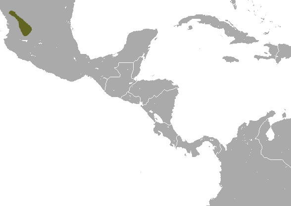 The average adult weight of a Zacatecas shrew is 7 grams (0.02 lbs)