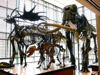Beneski Museum of Natural History Massachusetts museum